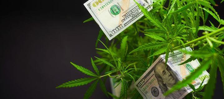cannabis-image